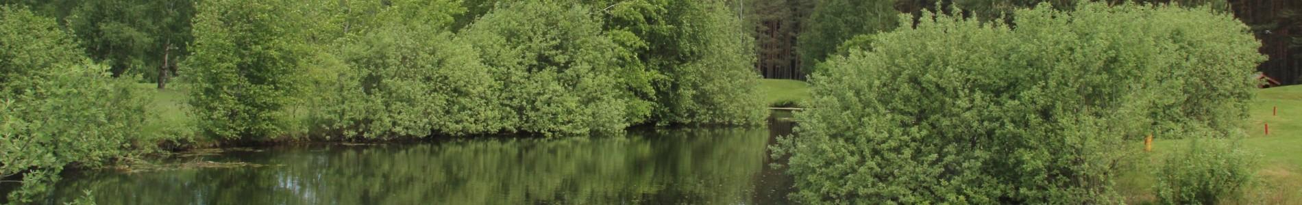 Bild Wasserlandschaft