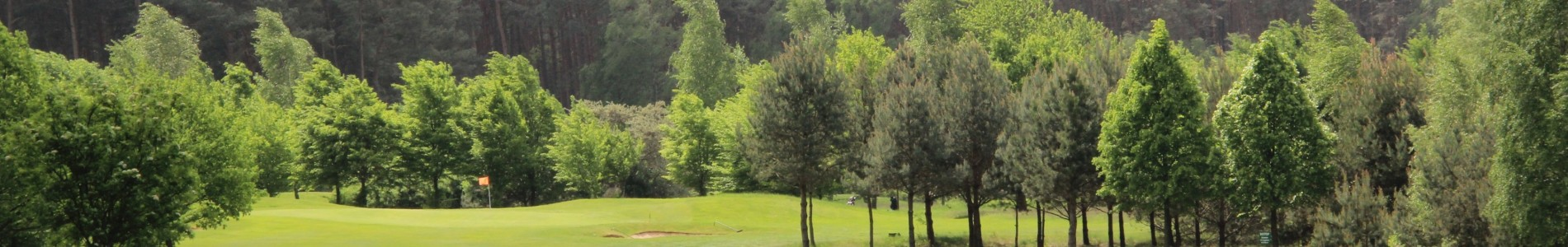 Landschaft mit vielen Bäumen