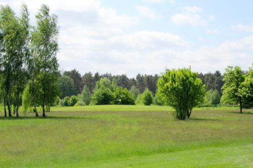 Bild Blick auf ein entferntes Grün mit Fahne