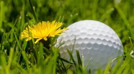 Bild Foto Golfball auf dem Gras neben einer Butterblume