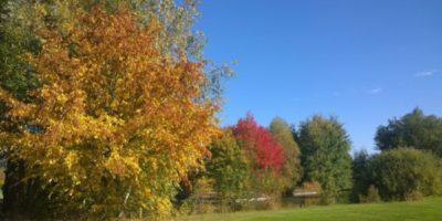 Kalliner Herbst-Aktion