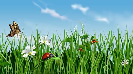 Bild Blumenwiese im Frühling