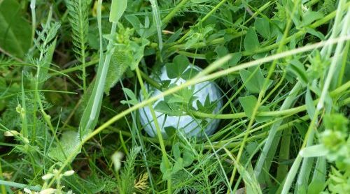 Bild Ball im Gras