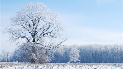 Bild Winter Baum mit Schnee
